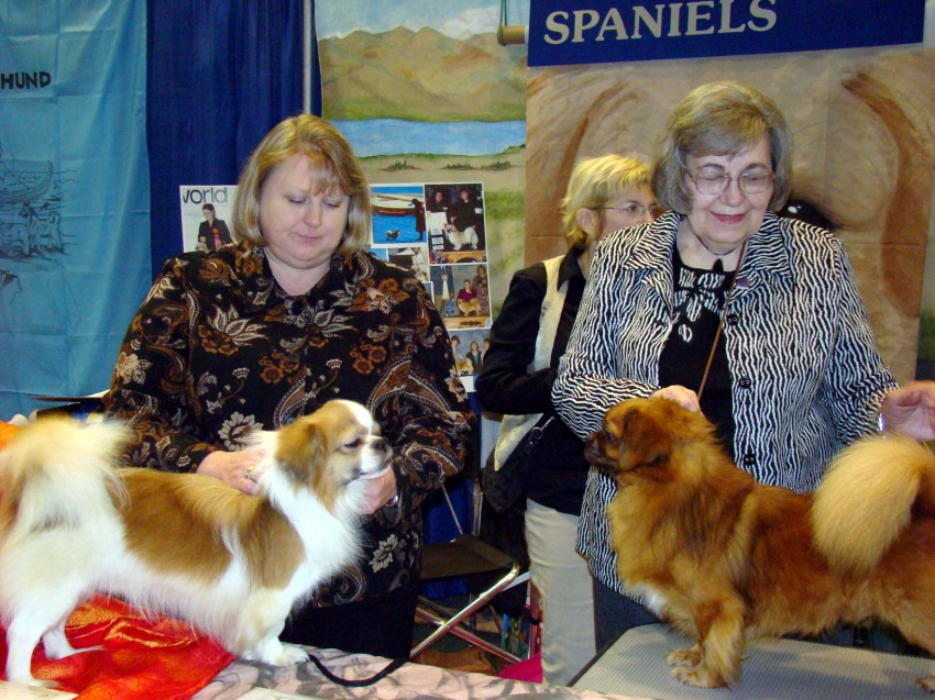 'BOND', 'Russell' & Owner/Handler, Kathryn Phillips, were AKC Meet The Breed Volunteers at the 2011 AKC/Eukanuba National Championship in Orlando, FL