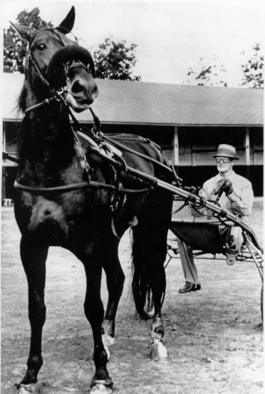 IAP090301-09/03/62-Indianapolis: Hambletonian winner,  'A. C.'s Viking',  with trainer-driver, Sanders Russell of Stevenson, Alabama. One of harness racings' top events, the $32,000 'Horseman Futurity' is on tap at the Indiana State Fair September 4, 1962. The race will give fans a chance to see  'A. C.'s Viking', winner of the Hambletonian last week at DuQuoin,Illinois.UPI Telephoto:Courtesy of Mary Lou Dondarski, 'The Hambletonian Society'