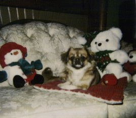 Click HERE for a 'CHRISTMAS MEMORY OF SOX' in verse, by her loving owner,Kathryn E. Phillips